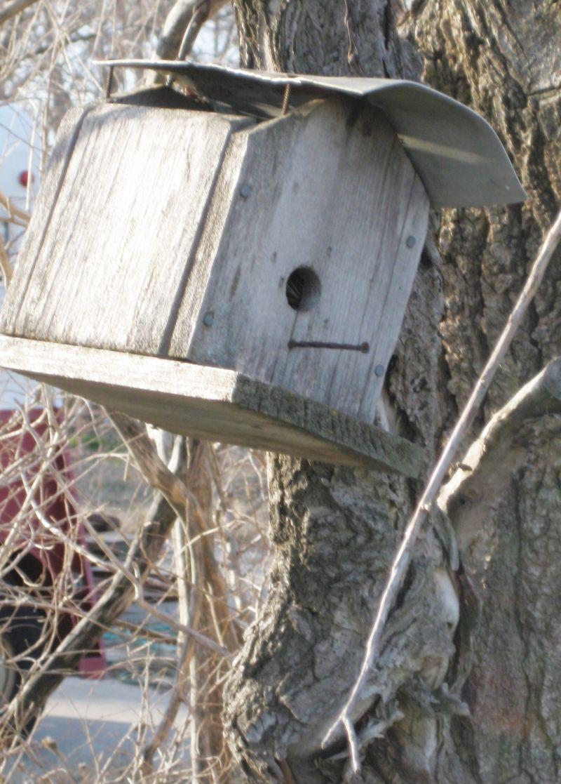 Birdhouse spring 011